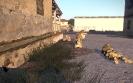Forskellige ArmA3 trænings billeder_36